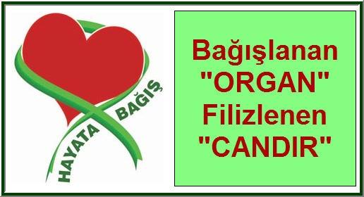 organ-bagisi-sloganlar-4